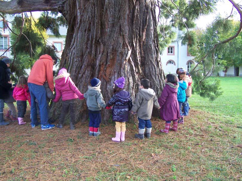 Tour_du_sequoia.jpg