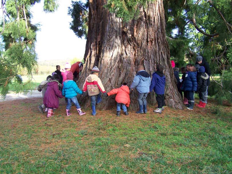 Tour_du_sequoia1.jpg