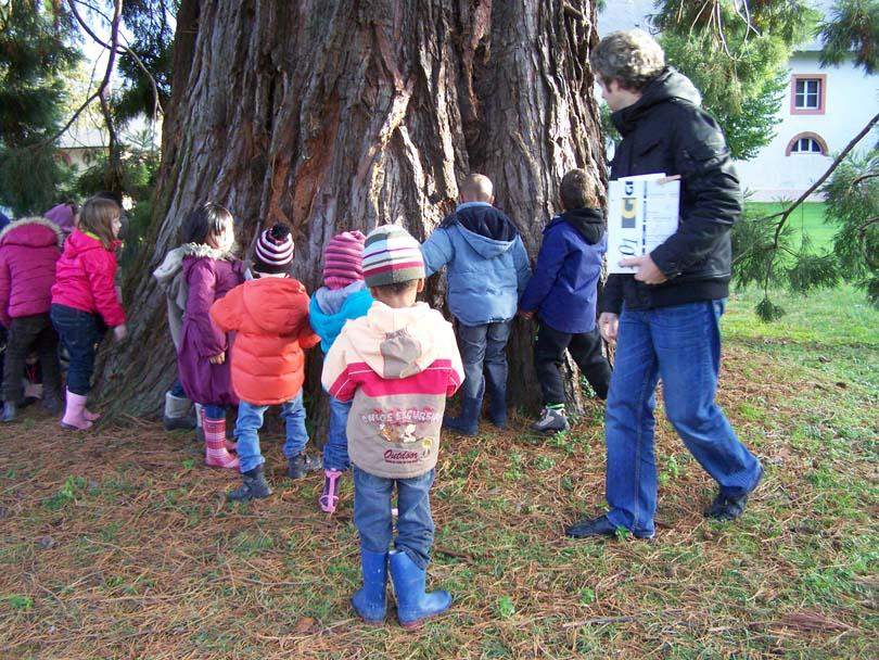 Tour_du_sequoia4.jpg